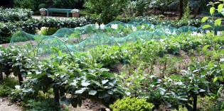 Back to Basics – Urban Micro-Farming