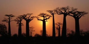 10 of the Most Magnificent Trees on Earth