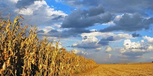 The Folly of Big Agriculture: Why Nature Always Wins