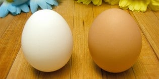Which Eggs Are Best?