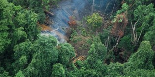 Earth Meanders: The Great Rainforest Heist