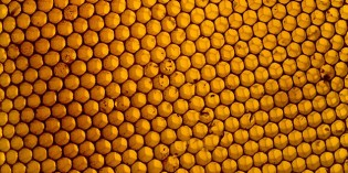 Honey: A Must Read For Those Who Eat It Regularly