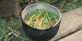 Ayahuasca – State of the Vine: 2014