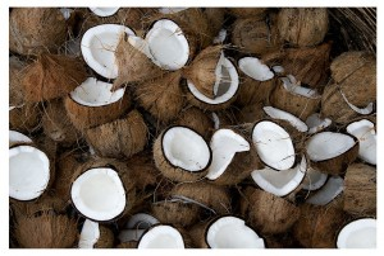 Flickr - Coconuts - Rildo Moura