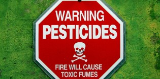 Common Insecticides May Be Linked to Kids' Behavior Problems
