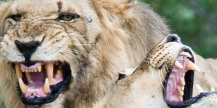 Research Draws Link Between Personality Disorders and Animal Instincts