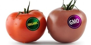Why We Must Fight To Label GMOs