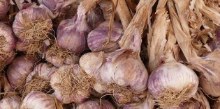 Raw Garlic Twice a Week Can Reduce Risk of Cancer by 40%