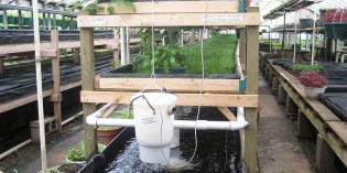 Geodesic Aquaponics Greenhouse Network – Providing the Basic Necessities of Life