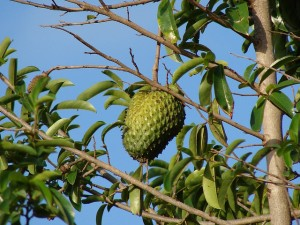 Flickr - guanabana - Tatters