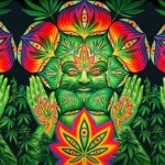 Cannabis – The Gateway Drug to Higher Consciousness and Happiness