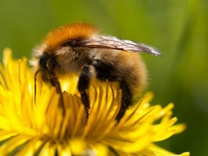 Flickr - bee - wwarby