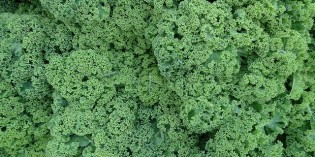 Kale: A Green Nutritional Powerhouse Everyone Should Eat