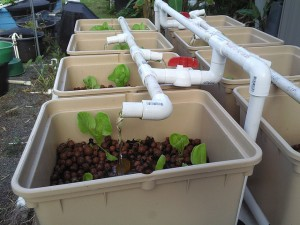 Flickr - Aquaponics - Kanu Hawaii