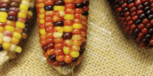 Mexico Protests Monsanto With a Carnival of Corn