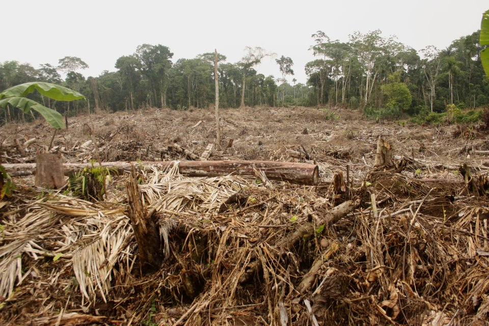 The negative impact of deforestation