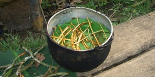 Ayahuasca: This Amazonian Brew May Be the Most Powerful Antidepressant Ever Discovered