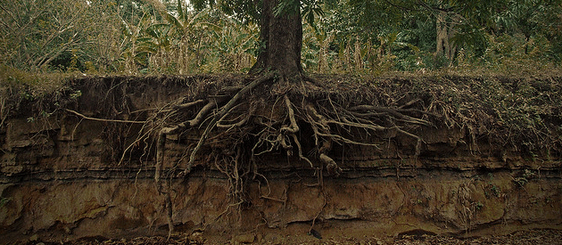 root causes of environmental issues John crace: two british academics argue that almost every social problem, from crime to obesity, stems from one root cause: inequality.