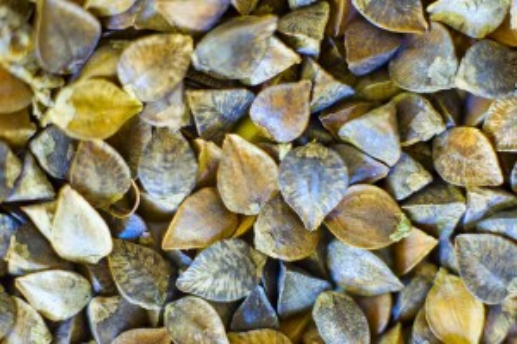 Flickr-buckwheat