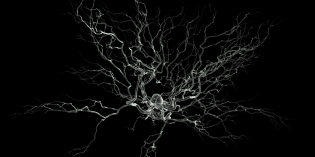 A Single Neuron Can Alter the Brain