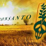 US Farmers Going Out of Business Due to GM Crop Contamination
