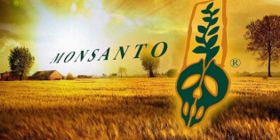 Monsanto Is About To Escape All Regulation From The USDA