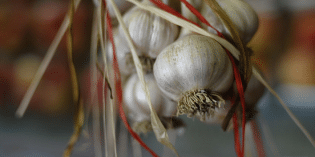Garlic Kills Brain Cancer Cells Without Side Effects