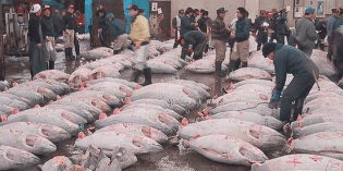 Just How Bad is Fukushima Fish?