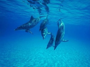 Flickr-dolphins-J. D. Ebberly