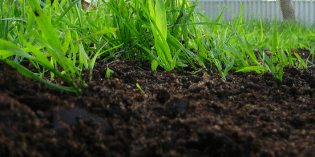 The Surprising Healing Qualities… of Dirt