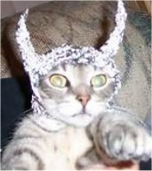 TIN FOIL HAT CAT, wary of propaganda                             being beamed from govmt