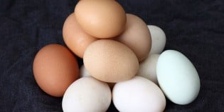 How Much Do Labels Really Tell You About How Eggs Are Produced?