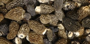 5 Types of Medicinal Mushrooms and How They Boost Health