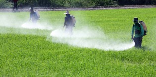 The Myth of Safe Pesticides