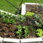The Secret to Building a Salad Keyhole Garden
