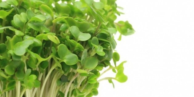 Mighty Broccoli Sprouts Rapidly Detox Pollutants