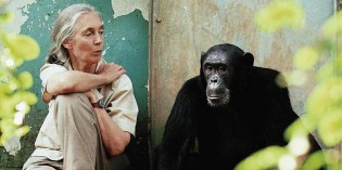5 Reasons to Have Hope for the Planet – Jane Goodall