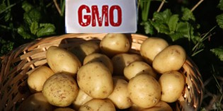 Genetically Engineered Potato Now Approved by USDA