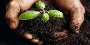 Microorganism-rich Soil as an Essential Part of the Food Supply