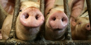 Idaho Court Strikes Down Ag-Gag Law