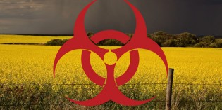 Monsanto/Bayer's GM Plants Contaminate Europe Despite Ban
