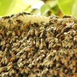 Life Inside The Beehive