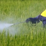 Scientists Have Warned for Years that Monsanto's Roundup Causes Cancer