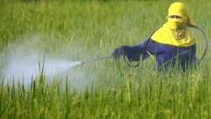 Pesticide Spraying