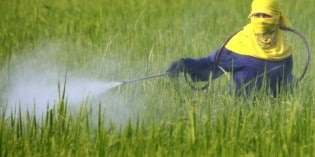 Just How Much Pesticide are You Eating Everyday?