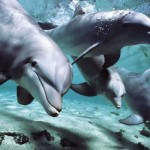 Dolphins Have Human-Like Intelligence and Their Own 'Language'