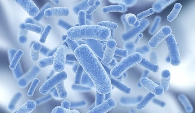 How to improve your immune system with probiotics waking times