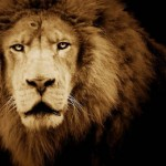 5 Signs You Might be a Well Armed Lamb… or a Lion