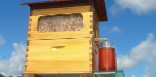 Fantastic Invention: Honey on Tap Directly from Your Beehive