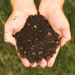 All Life Depends on Soil